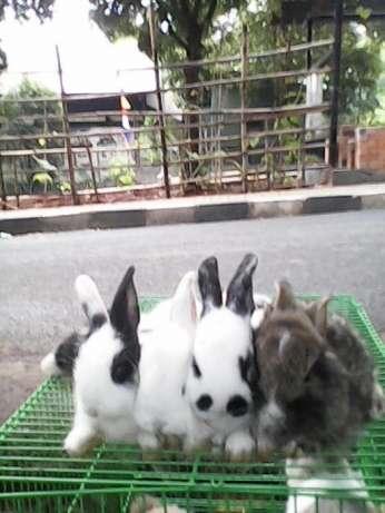 Jual semua jenis Kelinci