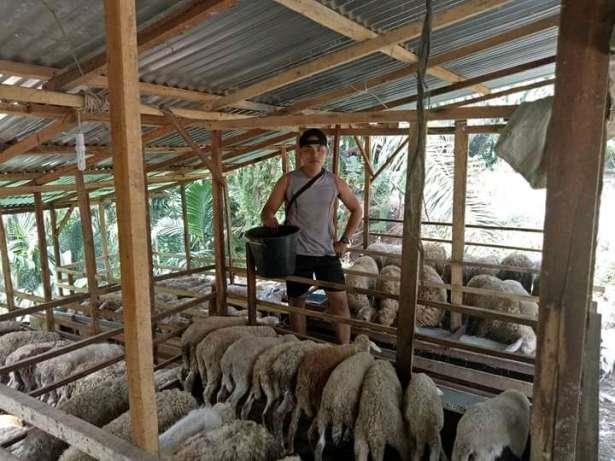 menyediakan kambing buat aqiqah