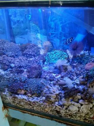 Anemon ikan laut Grosir dan eceran
