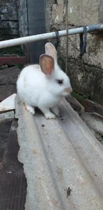 Jual kelinci sehat