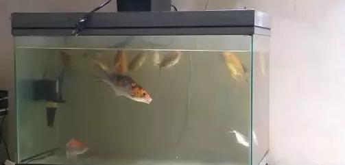 Aquarium + Ikan dll