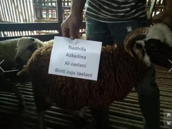 Jual kambing dan domba Aqiqah Murah free ongkir jabodetabek