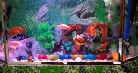 Aquarium Lengkap Aerator Filter Dan Ikan Mas Koki Jual Beli Hewan Jadi Mudah