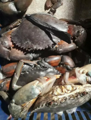 Jual kepiting bakau 55rb, hrg tertera di gambar