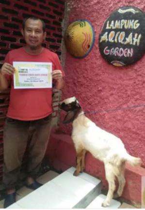 Pusat kambing Aqiqah Bandar Lampung Fresh Potong dari Kandang