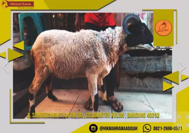 Domba Aqiqah Dan Catering Aqiqah Bandung