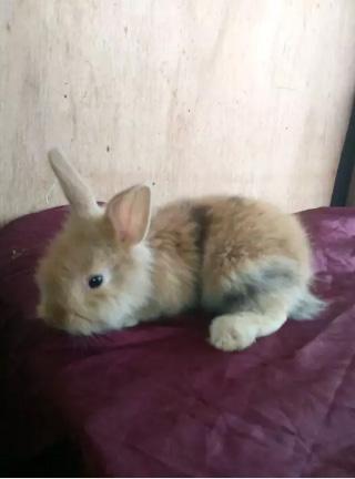 Kelinci ku suka bermain bersama sikecil..