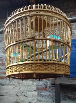Burung Kulhu Full seat Kandang Unik