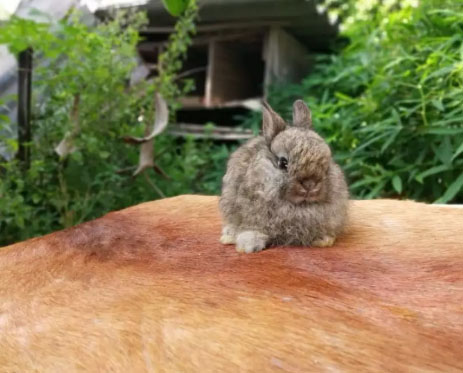 Kelinci Mini Jersey Wolly