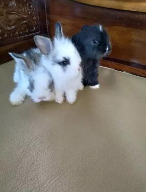 Anakan kelinci lucu