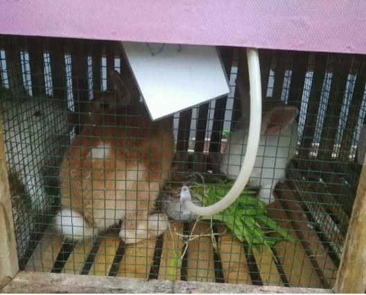 (GOJEK/GOSEND)paket indukan kelinci