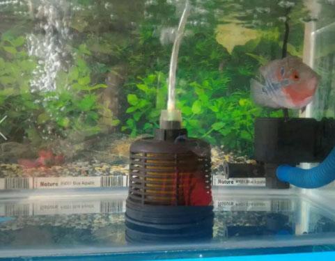 Ikan louhan SRD thailand plus aquarium dan oksigen