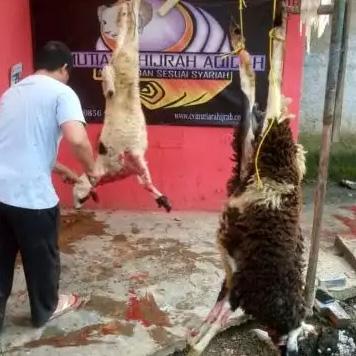 Jual domba kambing free pemotongan dan pengiriman   aqiqah