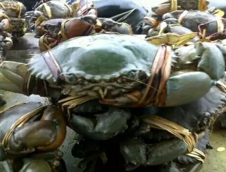 Jual kepiting bakau hidup
