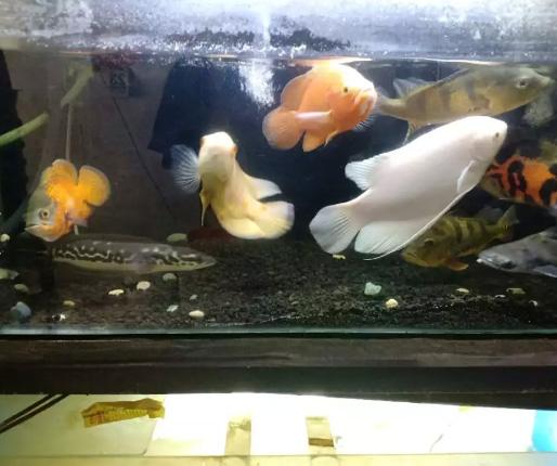 Jual Cepat NEGO Ikan dan Aquarium