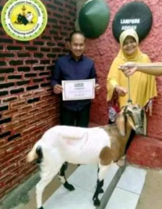 Pusat Aqiqah Lampung (Kambing Aqiqah Sehat, Segar, dan Berkualitas)