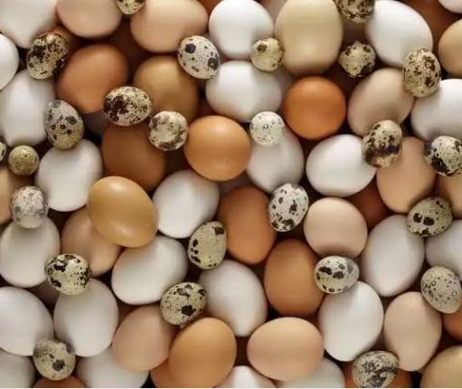 Jual telur ayam, puyuh dan bebek.