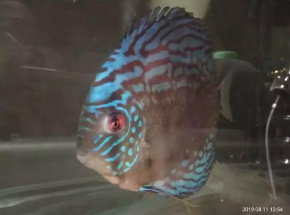 Ikan Laman 9 Jual Beli Hewan Jadi Mudah
