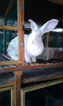 Kelinci sehat berbagai jenis