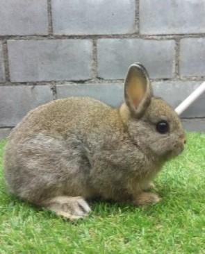 36+ Hewan kelinci yang lucu terbaru